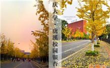 重庆银杏价格表,最新银杏价格查询-2017年3月3日