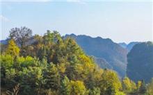 云南保山:国有林场改革释放发展活力