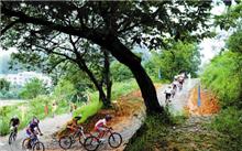 广州着手绿化升级将更换部分路段榕树