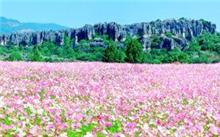 云南昆明:中国花海论坛花盛会落地云南石林