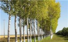 """淮安:乡土树种、珍贵树种替代杨树未来处处""""彩色林"""""""
