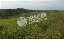 湖南省衡南县培育珍稀树种8000亩