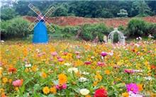 甘肃徽县积极发展高端花卉苗木产业