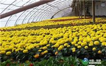 2017年前5个月漳州花卉苗木出口快速增长