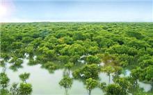 探访中国首个红树林湿地自然保护区