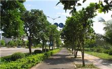 贵州赤水:园林养护行道树造型修剪 营造良好的绿化氛围