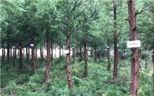 贵州探索林业单株碳汇扶贫新模式