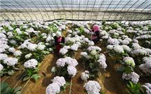 银川花卉产业多元化发展