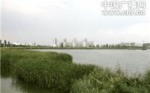 银川加大湿地湖泊保护与恢复力度