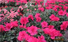 北京:花香中道别四大花卉交易市场