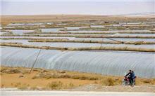 宁夏:退化土壤生态修复技术取得新突破
