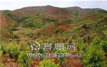 石家庄市秋冬季安排造林任务20万亩