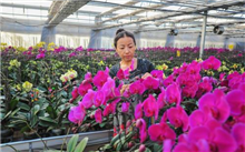吉林通化:多彩花卉铺开致富路