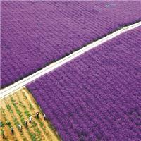 绿色产业助力肥西高质量发展
