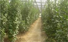 贵州哪里有香樟树卖!价位?绿化苗木的绿化功能强吗?