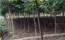 怎样辨认北美海棠品种?湖南省衡阳市哪有果树苗卖?
