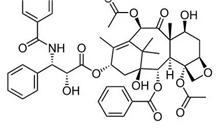 红豆杉的药用价值都有哪些?红豆杉如何鉴别?