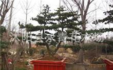 绿化树木种植哪些树种?园林树木有哪些?