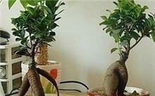 水生植物里加些什么营养好?水生植物为何不能生吃