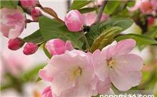 山楂树属于花灌木吗?不同花期的花色的花灌木树种