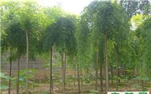 如何做好园林绿化工程的管理工作?