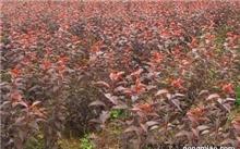现代农业的发展重点是发展什么?为什么要发展现代农业?