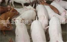 养猪养殖证有什么用?生猪养殖上市公司有哪些?