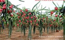 中国什么地方水果种植最多?湖南省可以种植什么水果?