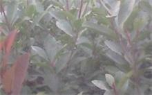 深圳皇岗公园怎么样?好玩吗?各种树的名称