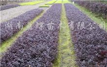 盆栽栀子花应该如 何养 护?怎么养好盆栽栀子花和沫莉花?