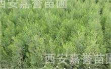 怀来县有没有一个合盛的海棠苗木