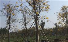 园林绿化养护需要注意哪些问题?园林绿化植物养护有哪些方法?