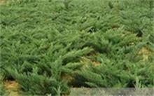 黑龙江绿化一般都用什么树苗?黑龙江省果树补偿标准