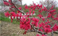 园林植物苗木培育技术,你好,我想学香椿芽种植技术