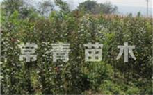 果树一定需要嫁接吗?山东哪里有卖果树苗木的?