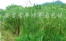 油松与圆柏的区别,中国森林最多的地方在哪?