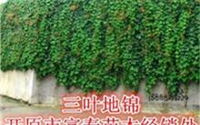 果树的种植技术,怎样让盆栽果树早结果?