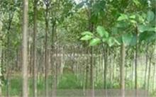 松树 柏树适合种什么地方?那种松树可以在阳台种植?