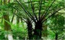 这是什么树?松树雌雄怎样区别?图片赐教!