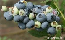 山东哪里有卖果树苗木的?山东果树苗木哪里最全?