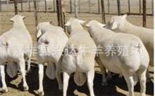 肉牛的养殖技术有什么?山东肉牛养殖村养牛羊