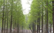 简述北京市园林绿化管理局的职能和机构设置