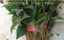 描写树苗的词语,那些树苗可绿化用