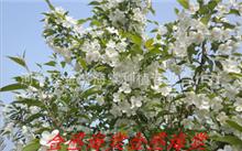 国内的珍贵树种有几种?浙江南部适合种植什么名贵树木?