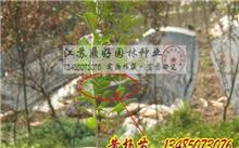 塔柏扦插养殖,新疆昌吉地区能种塔柏吗?