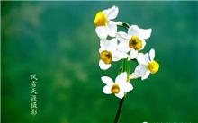 怎样养好水仙花?水仙花要怎么养?