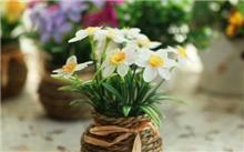 水仙花该怎么养?怎样养水仙花?