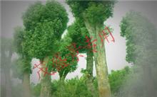 苏州做园林绿化该找哪一家?苏州哪个园林可以称为苏州园林?