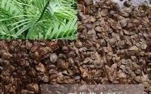 谈谈南方红豆杉价格,和曼地亚红豆杉有哪些区别?