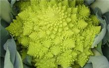 全国各地的花菜价格?菜花的营养价值是什么?